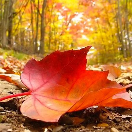 Demir & Seymen – Autumn Leaf Mix