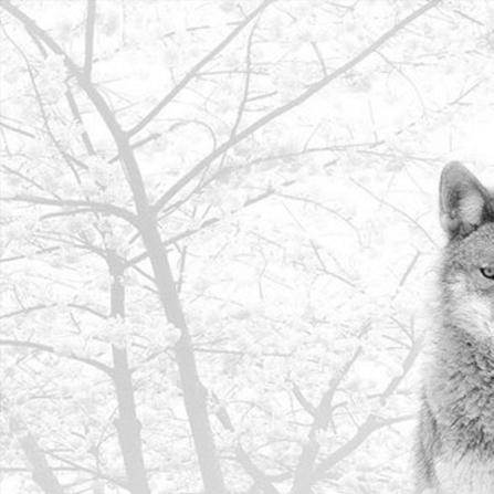 FlicFlac – Wintermärchen